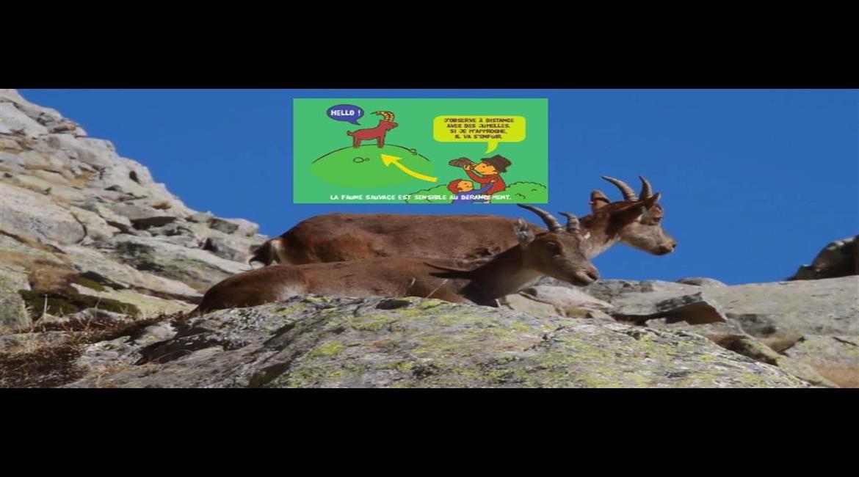 ENVIRONNEMENT : Respectons les animaux sauvages