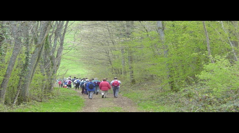 Les bonnes pratiques pour randonner en forêt